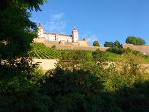 Würzburg, Weinberge im Morgenlicht